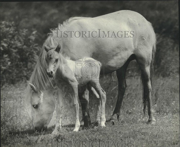 1982 Press Photo A young horse next to its mother, Winnebago County, Wisconsin - Historic Images