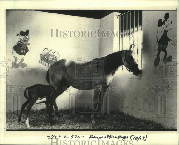 1985 Press Photo A decorated nursery stall for Saegina and her new-born filly. - Historic Images