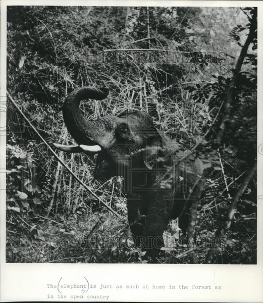 Press Photo The elephant is at home in the forest and the open country - Historic Images