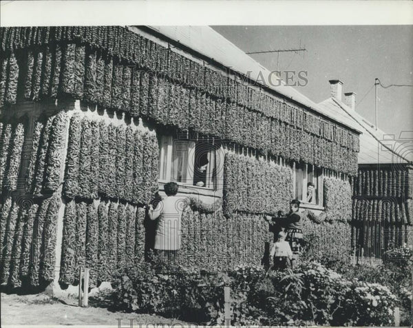 Press Photo The Famous Hungarian Red Pepper Paprika in Kalocsa, South Hungary - Historic Images