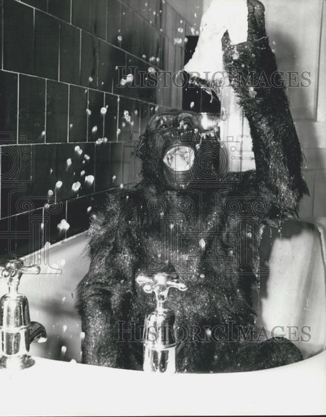 Press Photo Gorilla happily takes a bath - Historic Images