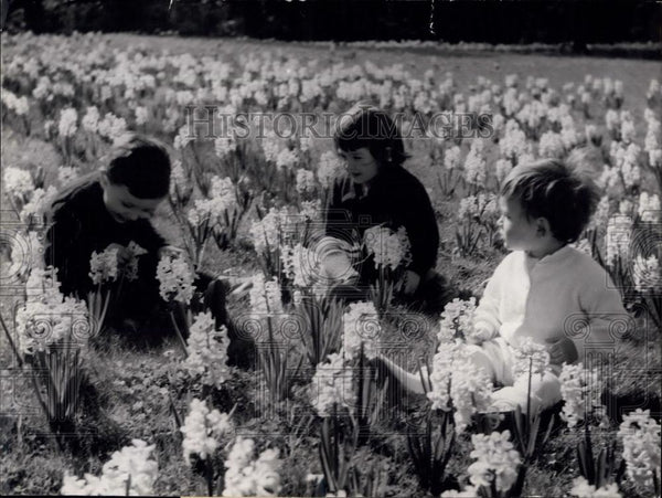1957 Press Photo Young Parisians among Daffodils and Blue Bells - Historic Images