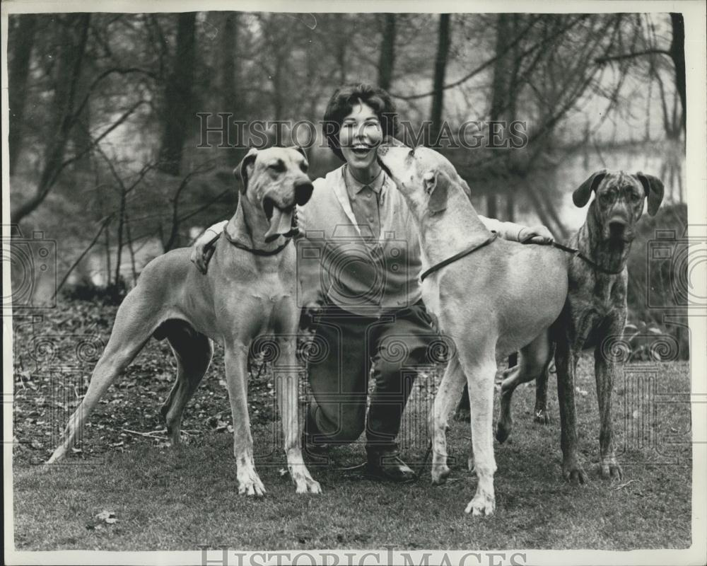 1958 Press Photo Great Danes for World's Greatest Dog Show