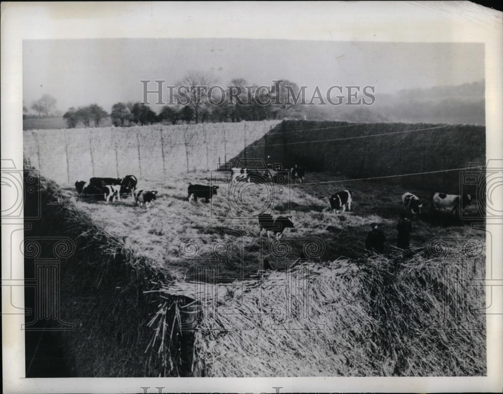 1943 Press Photo W Alexander Of Eynsford, Kent Constructed Straw Cattle Yard - Historic Images
