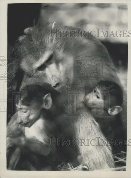 Press Photo Taking care of all the babies - Historic Images