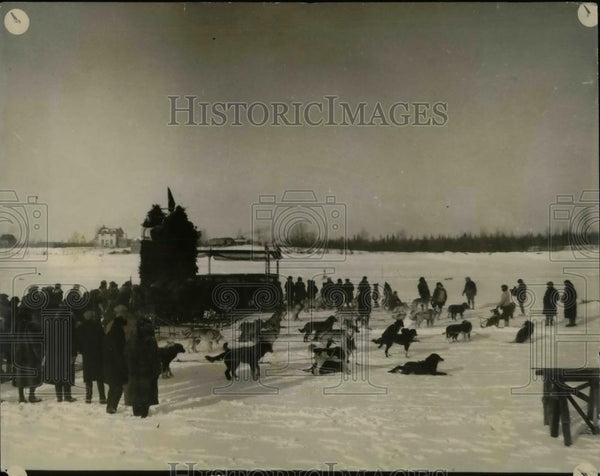 1927 Press Photo Dog deby race teams for 120 mile race - Historic Images