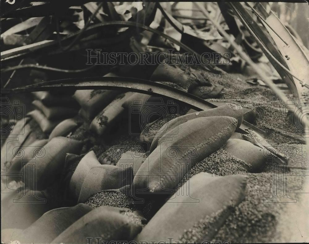 1925 Press Photo 20 million lbs of green coffee bean ruined in a LA. fire - Historic Images