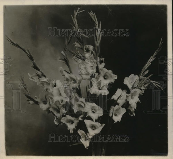 "1928 Press Photo ""Starlight"" Gladiolus at New York Botanical Garden - Historic Images"