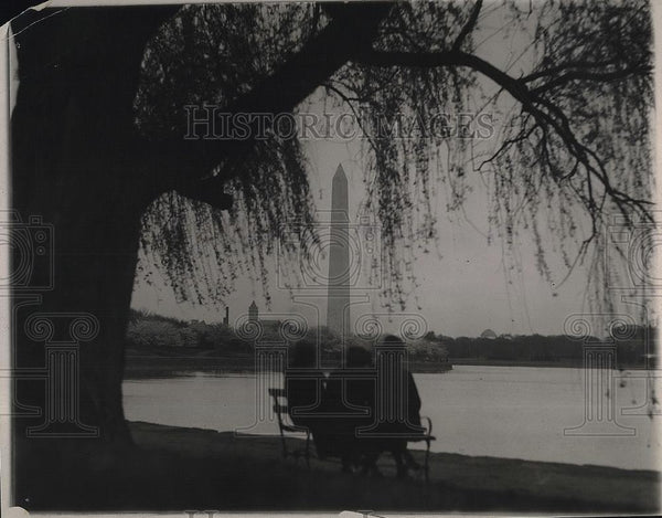 1921 Press Photo A Japenese Cherry Tree in front of the Washington Memorial. - Historic Images