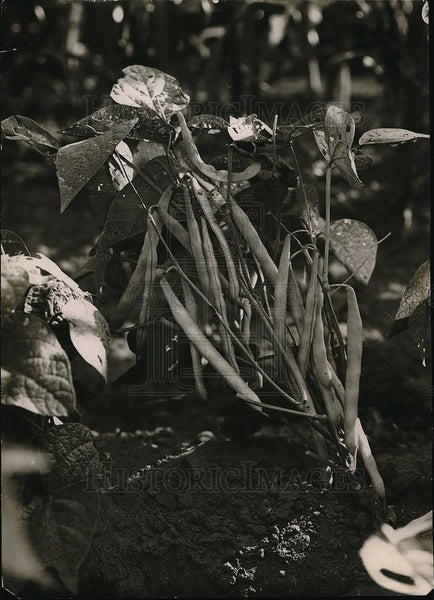1923 Press Photo View Of Plants Blooming In The Ground - Historic Images