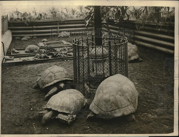 1925 Press Photo London zoo turtles & gas stove to warm them - neb50043 - Historic Images