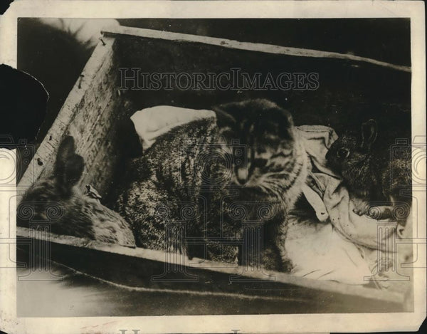 1918 Press Photo Cat Mothers Rabbis - Historic Images