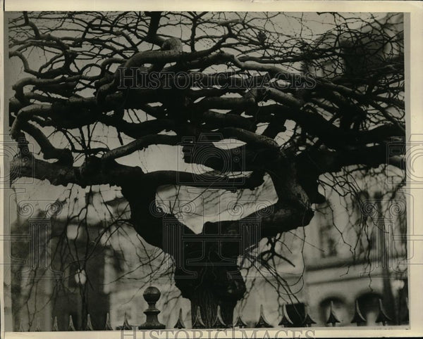 1927 Press Photo Tree in front of Building - Historic Images