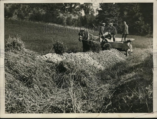 1925 Press Photo Maj JA Morrison & potato harvest near Reading, Pa - nec38922 - Historic Images