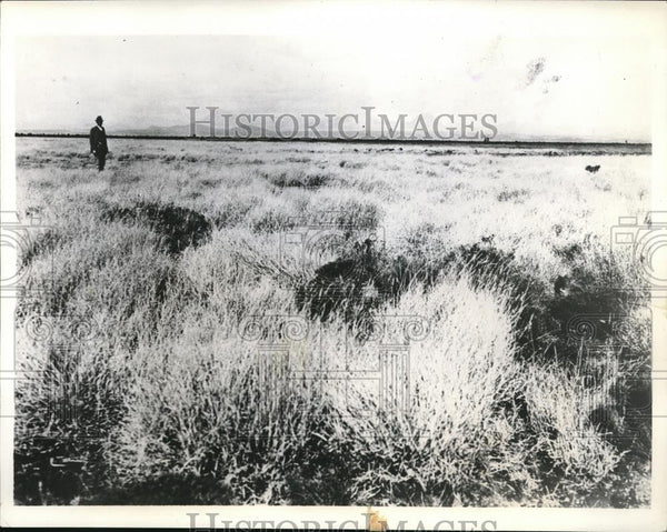 1934 Press Photo Remnant of the Tobosa Grass Flat in Arizona and and New Mexico. - Historic Images