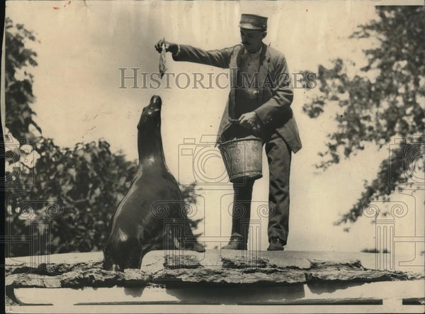 1924 Press Photo Sea lion at breakfast by a fisherman of renowned ability - Historic Images