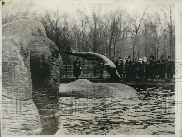 1924 Press Photo Brownie, a Golden Gate sea lion at Bronx Park Zoo - Historic Images