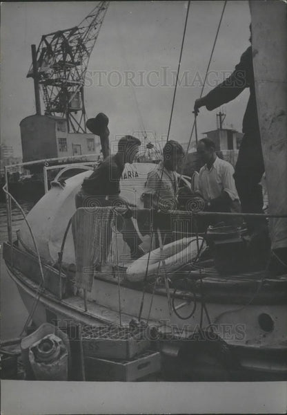 1953 Press Photo Jean Pillon Expedition Member Sloo Maria Casablanca Harbor - Historic Images