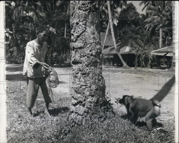 Press Photo Sumatra man and his trained monkey - Historic Images