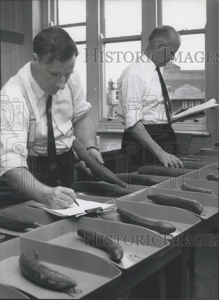 Press Photo Grading cucumbers at Alexandra House, Kingsway - Historic Images