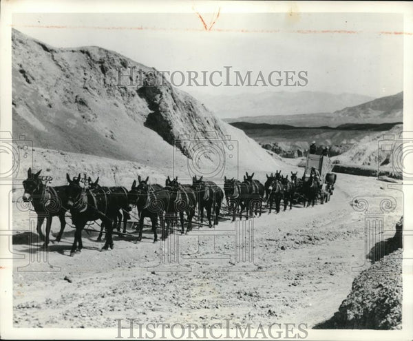 Press Photo The horses with the carriage in California - Historic Images