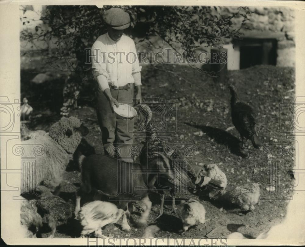 1924 Press Photo Gobbler, Lamb, goat and chickens on the Turkey farm - Historic Images