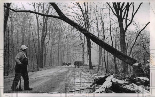 1924 Press Photo Rocky River Ohio diseased elm trees cleared along roads - Historic Images