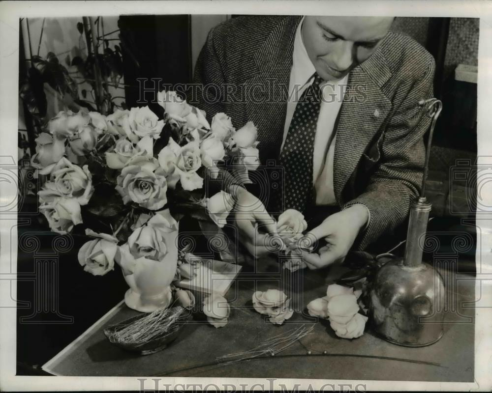 1944 Press Photo Marc Leeds creator of Cabbage Rose picks flower for Giant Rose - Historic Images