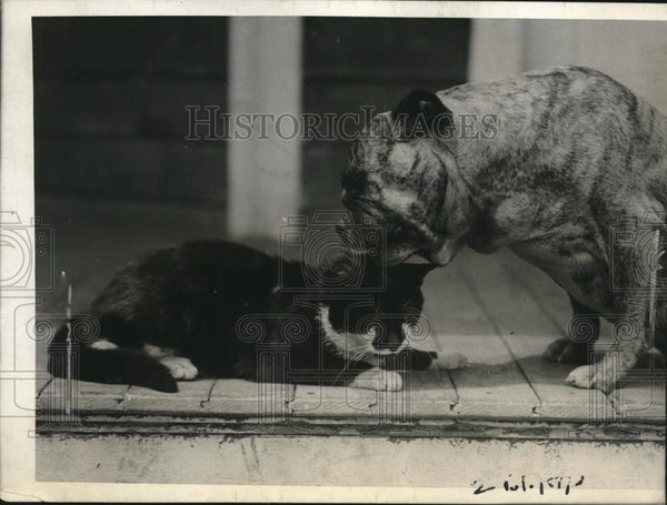 1923 Press Photo Mike the cat & Kansas the bulldog in a NY home - Historic Images