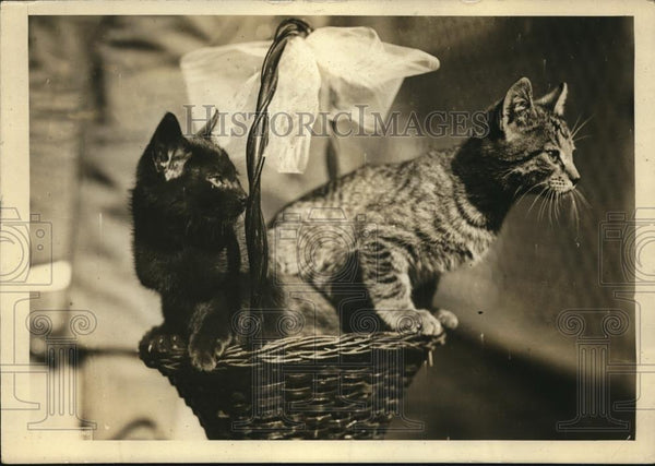 1924 Press Photo Basket of prize kittens arrive at the White House - Historic Images