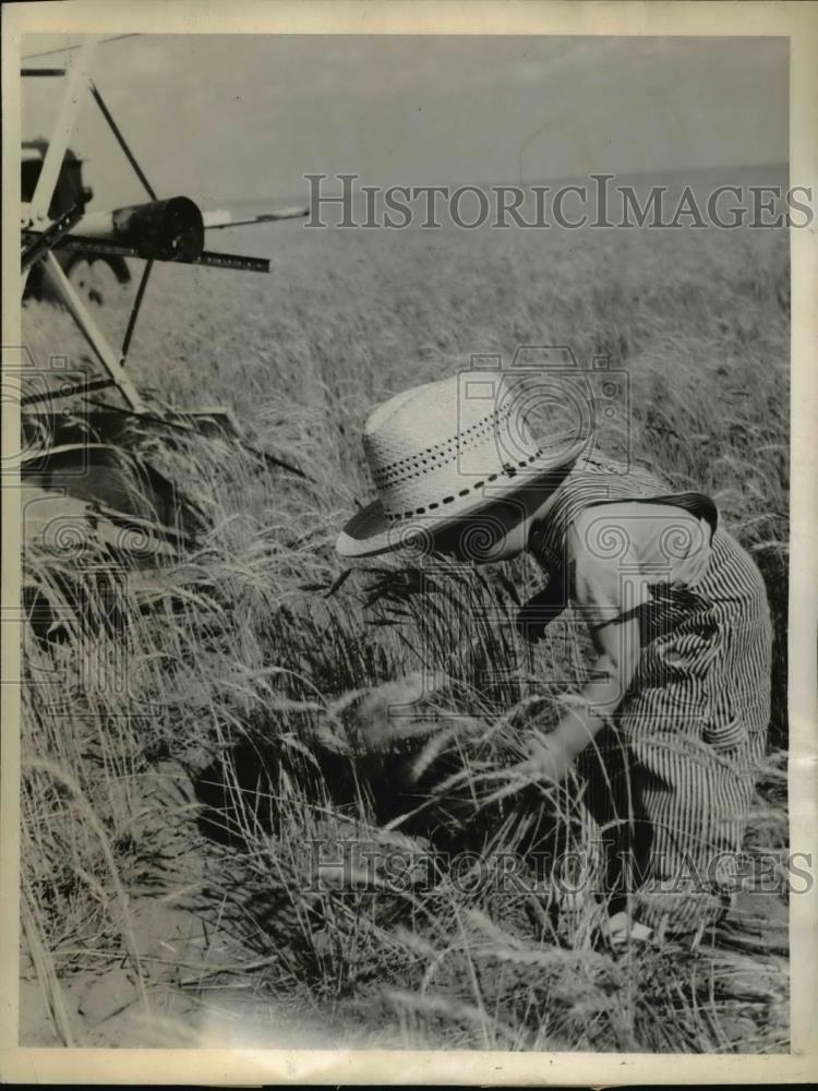 1943 Press Photo Little Joe Bob Bralley as he helps out in the field - nee35361 - Historic Images