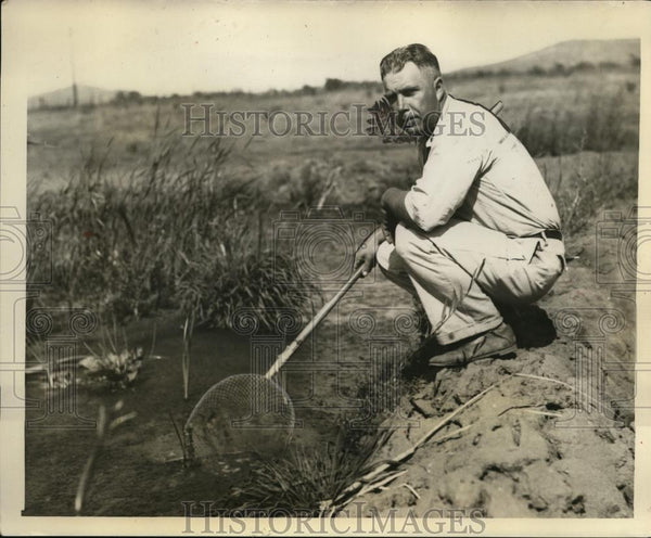 1931 Press Photo MW Herriman Operator of Lakeside Frog Farm Dipping Minnows - Historic Images