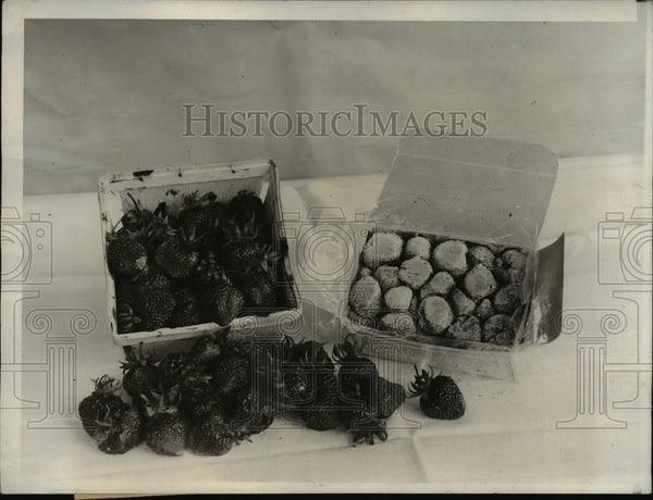1931 Press Photo 3 Day Old Strawberries & Quick Frozen Strawberries - Historic Images