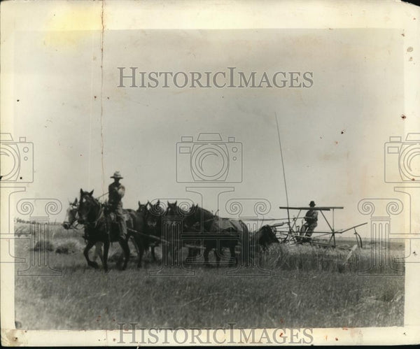 1927 Press Photo Six Horses and a binder of George Miller of Sawyer at Work. - Historic Images