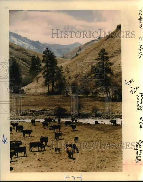1992 Press Photo Livestock Grazing Near Oregon Waterways May Be Regulated - Historic Images