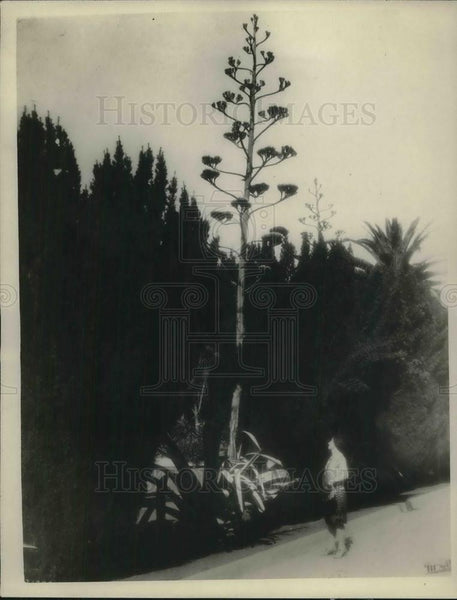 1926 Press Photo A century plant at Capitol Park in Sacramento CA - Historic Images