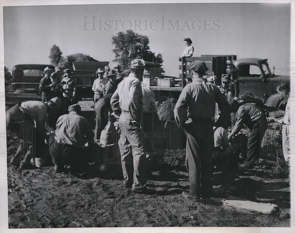 1947 Press Photo Workers bolster levee vs floods at St Francisville Mo - Historic Images