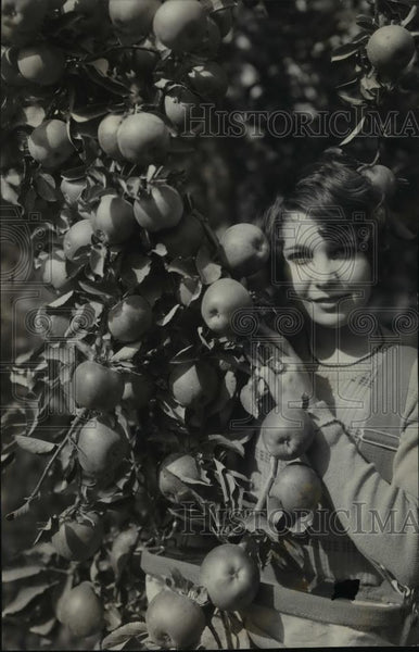 1936 Press Photo Apple Orchard - Historic Images