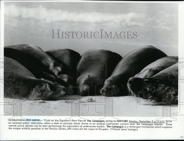 Press Photo Sunbathing Sea Lions Galapagos Islands - spp01025 - Historic Images