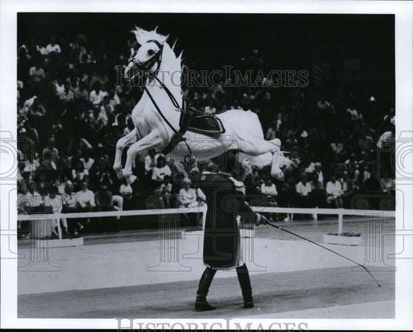 1992 Press Photo Lipizzaner Horse - spa21733 - Historic Images