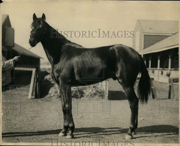 1928 Press Photo Horse named Keith of Parview Stables, Kentucky Derby candidate - Historic Images