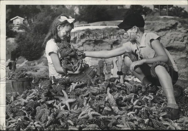 1936 Press Photo Starfish - spx09121 - Historic Images
