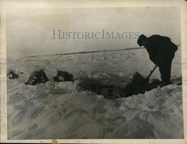 1922 Press Photo Saskatchewan farmer digging through snow get to harvest - Historic Images