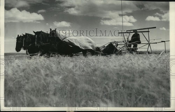 1938 Press Photo J.C. Nelson using horses and binders in his wheat field - Historic Images