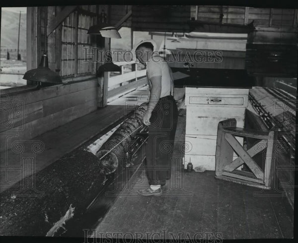 1938 Press Photo Lonnie Bull scaling logs in C.T.C Mill, Lewiston, Idaho - Historic Images