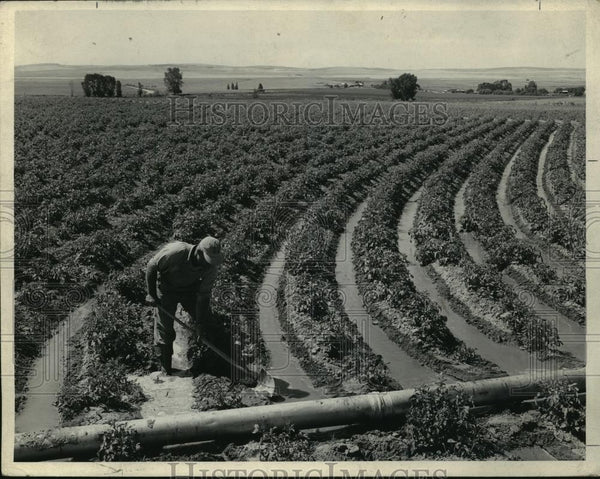 Press Photo View of the irrigation in George W. Lovell Farm, Ririe, Idaho - Historic Images
