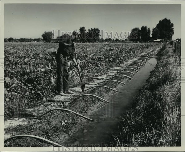 1949 Press Photo Irrigation system in a farm at Willamette Valley - spx11085 - Historic Images