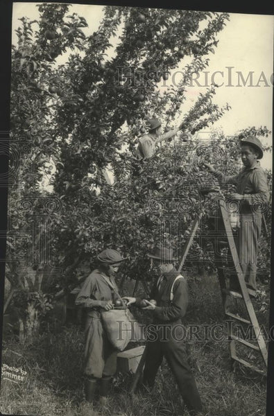 1936 Press Photo Orchard Scene - spx11649 - Historic Images