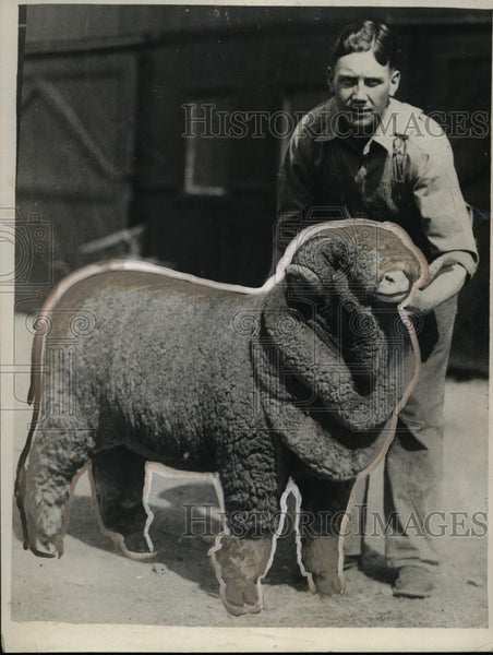 1929 Press Photo Rambouillett Ram Sold for $1525, Salt Lake City - neo01131 - Historic Images