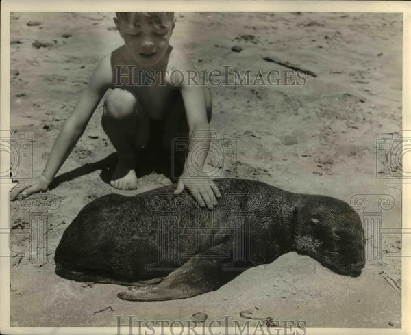 1937 Press Photo Boy on beach w/ young sealion - orb49617 - Historic Images